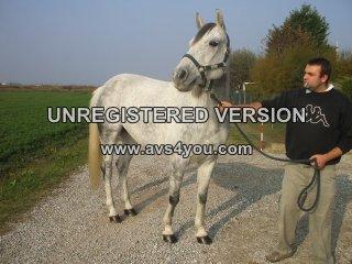 Vendo cavallo castrone rexs id 159241 for Affettuoso in inglese