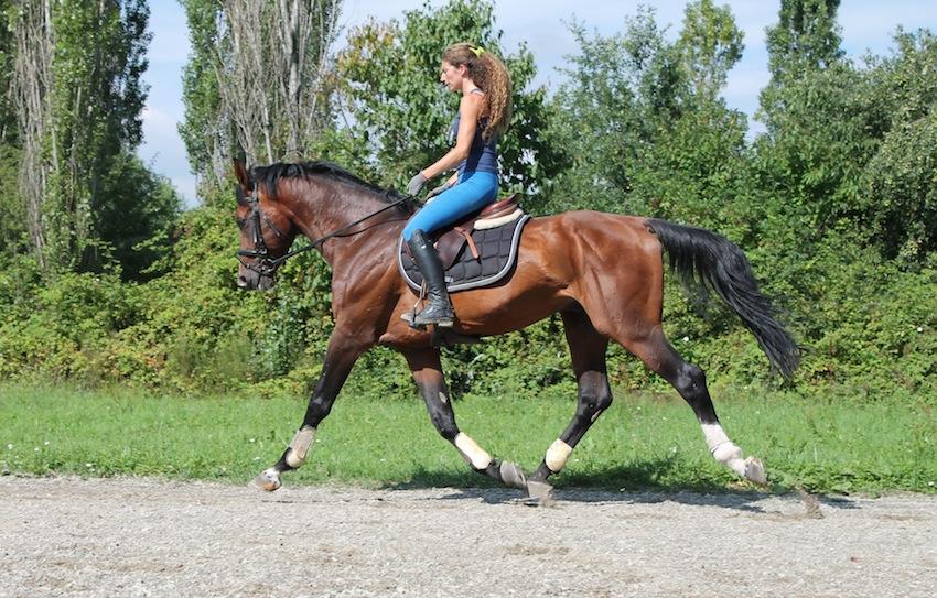 Bravissimo Cavallo Italiano Da Dressage ID 191348