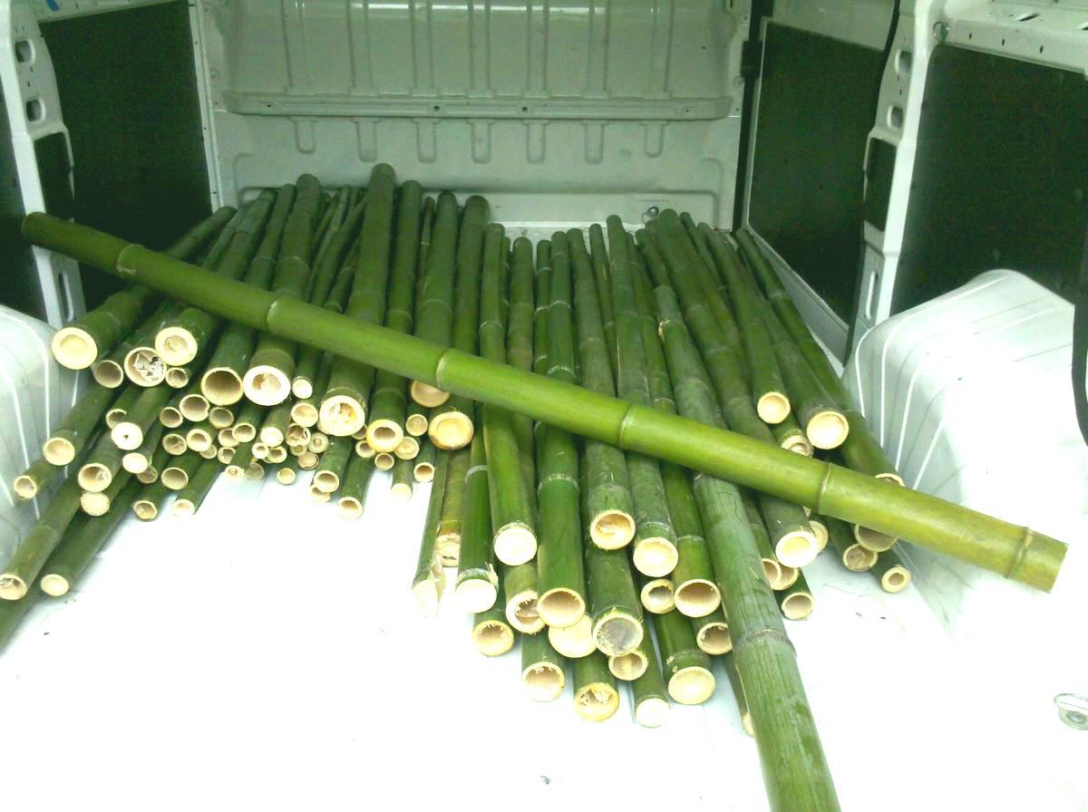 In vendita canne di bambu con diametri id 192031 for Vendita bambu