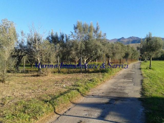 Terreno agricolo cod 188 - 1/5