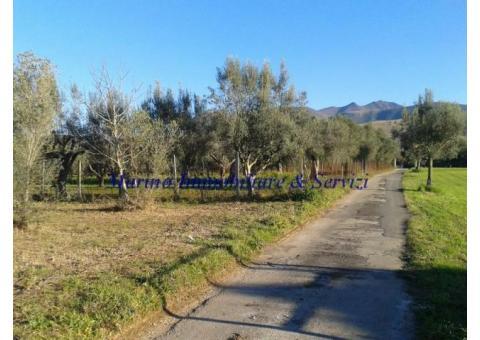 Terreno agricolo cod 188