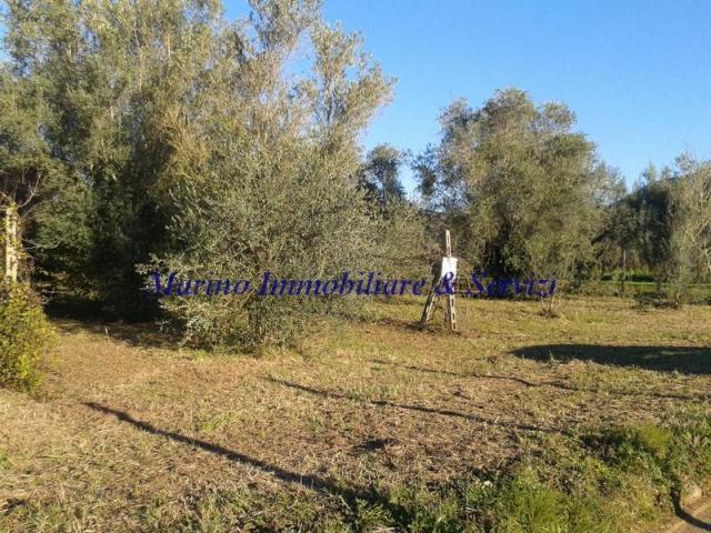 Terreno agricolo cod 188 - 2/5