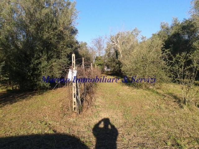 Terreno agricolo cod 188 - 3/5