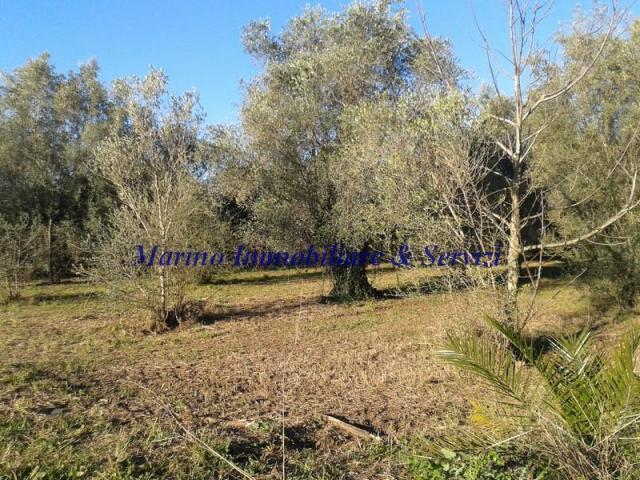 Terreno agricolo cod 188 - 4/5